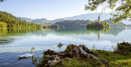 How to establish a company in Slovenia?