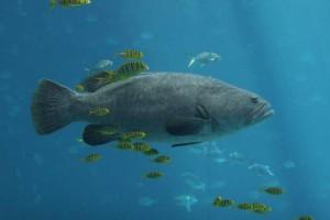 5 prednosti malih podjetij ali kako plavajo majhne ribe