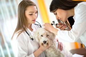 veterinarska dejavnost