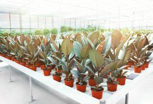 izvoz rastlin