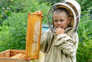 čebelar