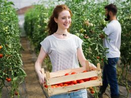 Lepše vreme pomaga dejavnosti pridelovanja paradižnikov in drugih zelenjadnic, melon, korenovk,gomoljnic ter drugih vrtnin