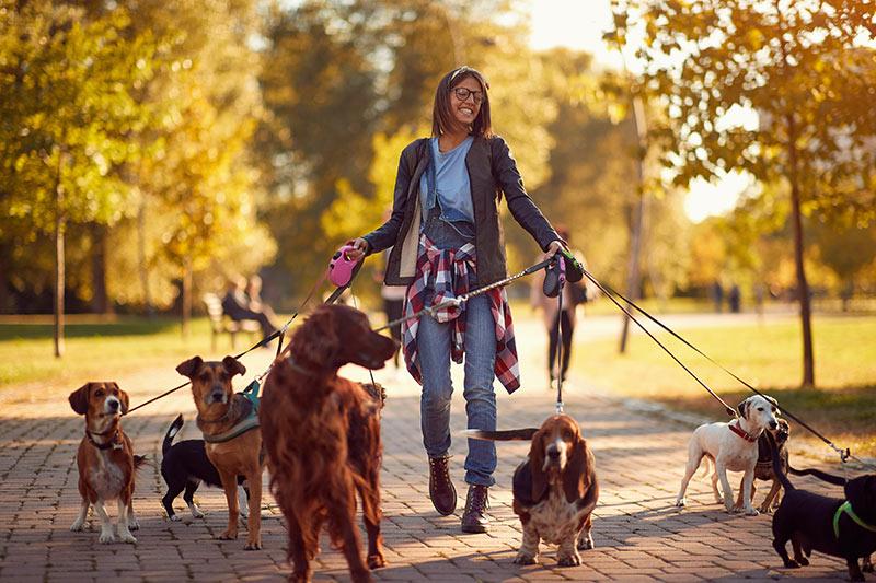 Sprehajanje psov med počitnicami je lahko izjemno zabavna aktivnost, ki jo lahko opravljate tudi kot dejavnost podjetja!