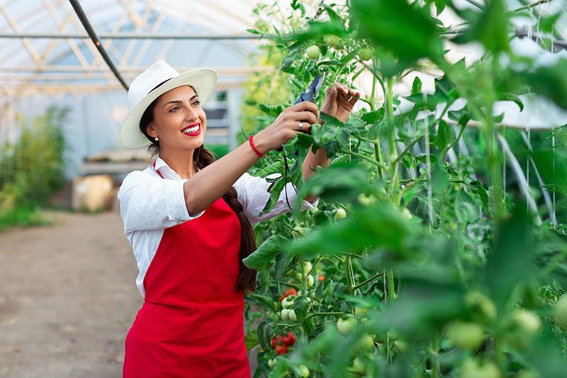 Rastlinjaki - rešitev za podjetnike, ki se ukvarjajo s pridelavo zelenjave