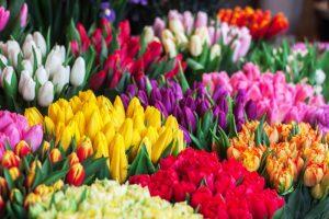 Prodaja cvetja - rožice imajo svoj potni list